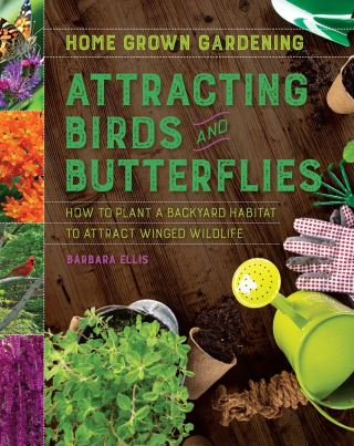 Attracting Birds and Butterflies