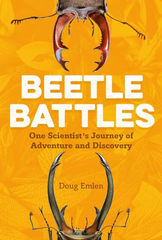 Beetle Battles