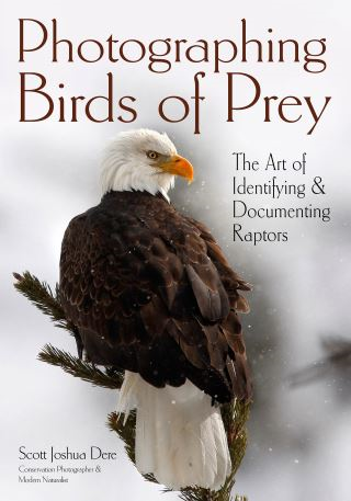 Photographing Birds of Prey