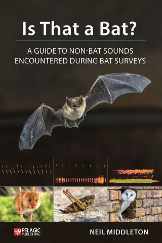 Is That a Bat?