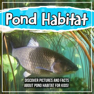 Pond Habitat: Discover Pictures and Facts About Pond Habitat For Kids!