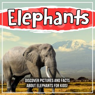Elephants: Discover Pictures and Facts About Elephants For Kids!