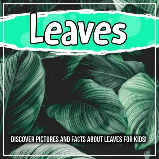 Leaves: Discover Pictures and Facts About Leaves For Kids!