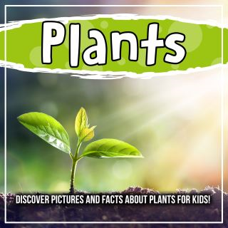 Plants: Discover Pictures and Facts About Plants For Kids!
