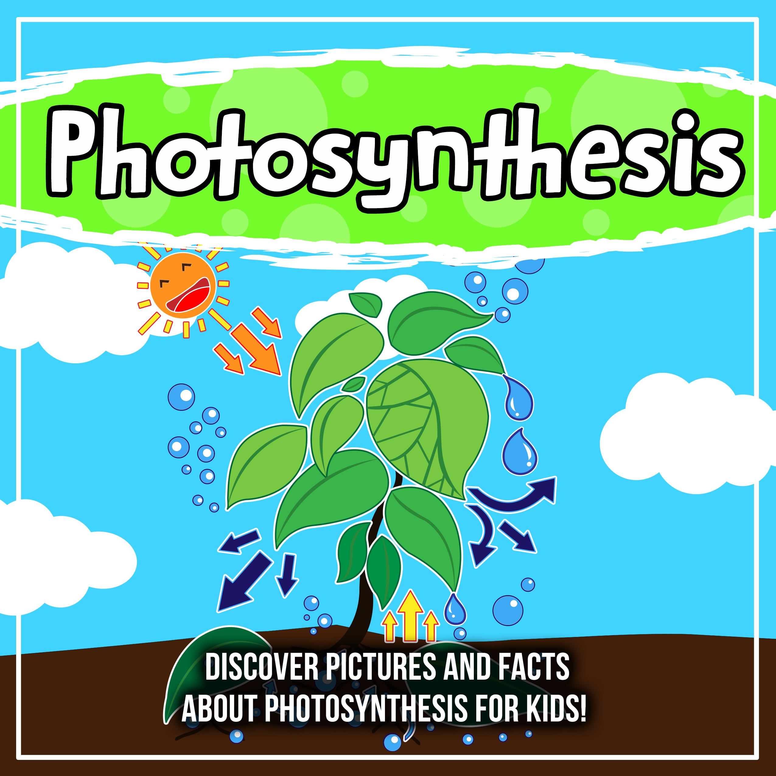 Photosynthesis: Discover Pictures and Facts About Photosynthesis For Kids!