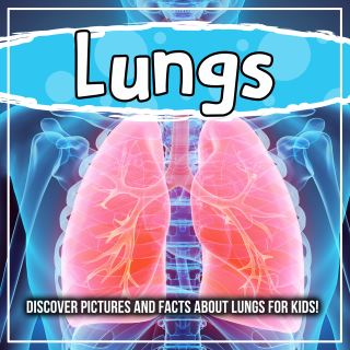 Lungs: Discover Pictures and Facts About Lungs For Kids!