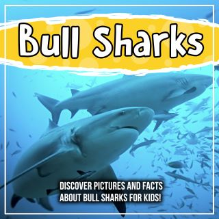 Bull Sharks: Discover Pictures and Facts About Bull Sharks For Kids!