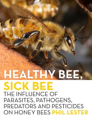 Healthy Bee, Sick Bee